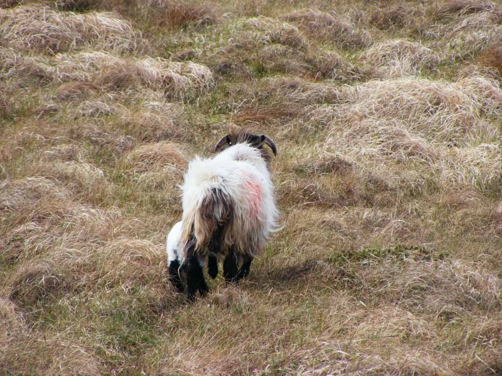 Photo of a Ewe and Lamb 2