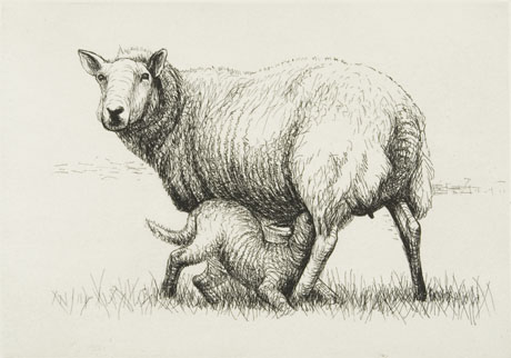 Sketch of sheep and lamb, by Henry Moore