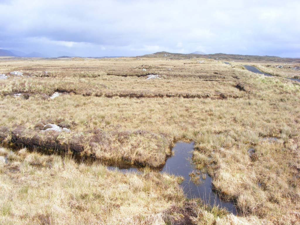 Photo of a Bog Pool