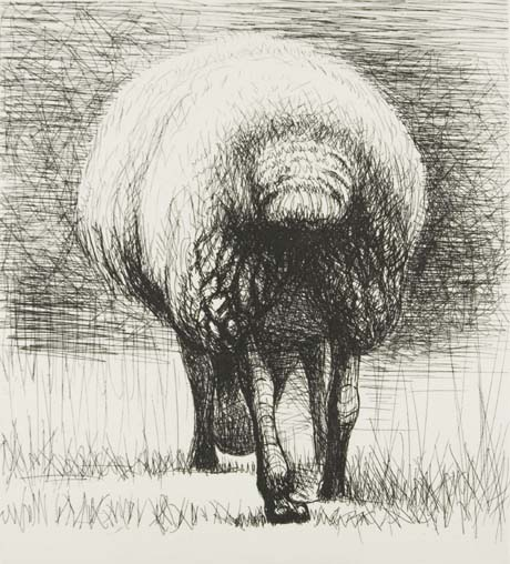 Sketch of a sheep from behind, by Henry Moore