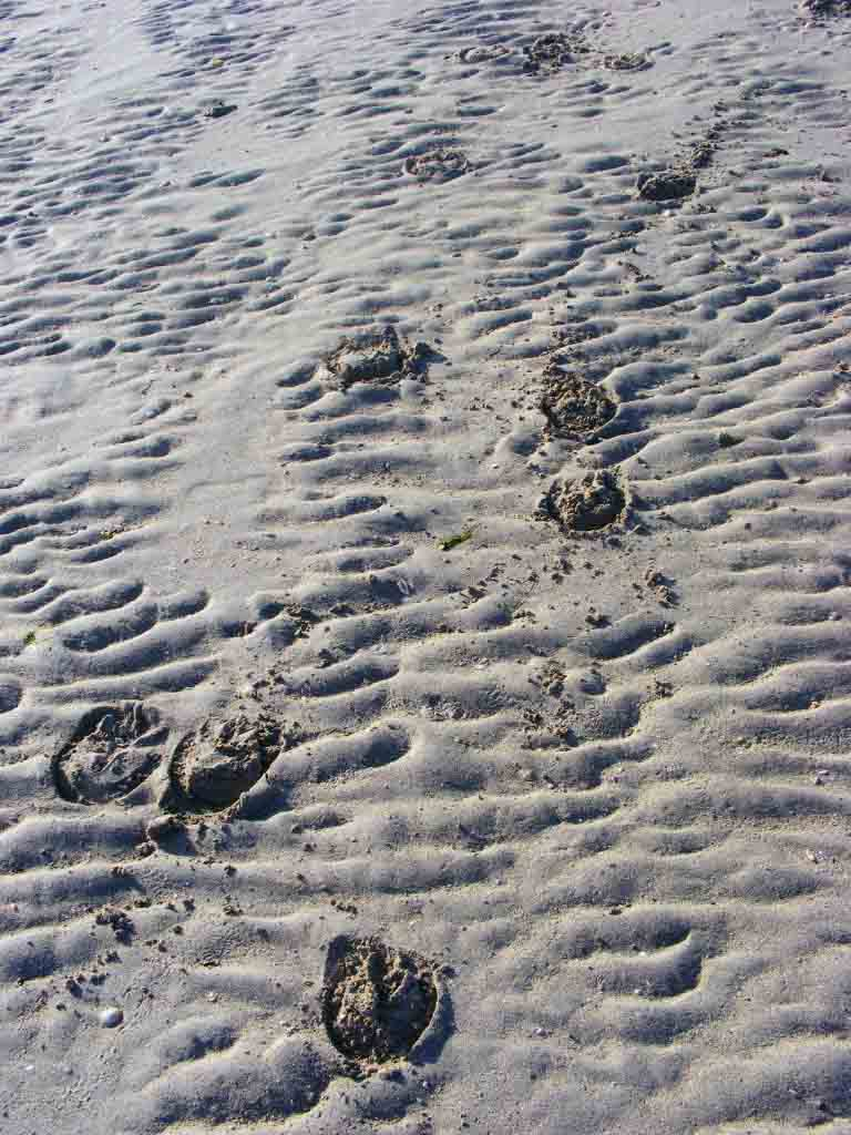 Photograph of pony tracks in the sand