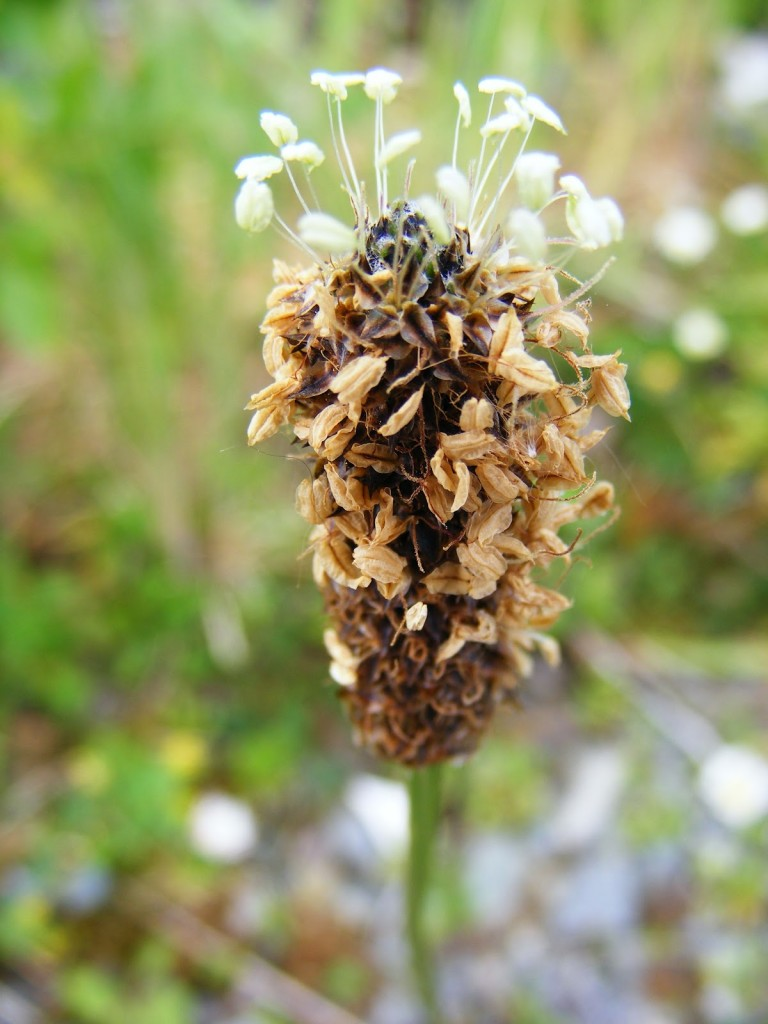 Photo 2 of a seed head