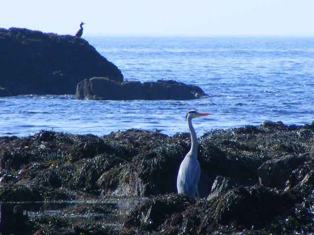 Photo 3 of Heron