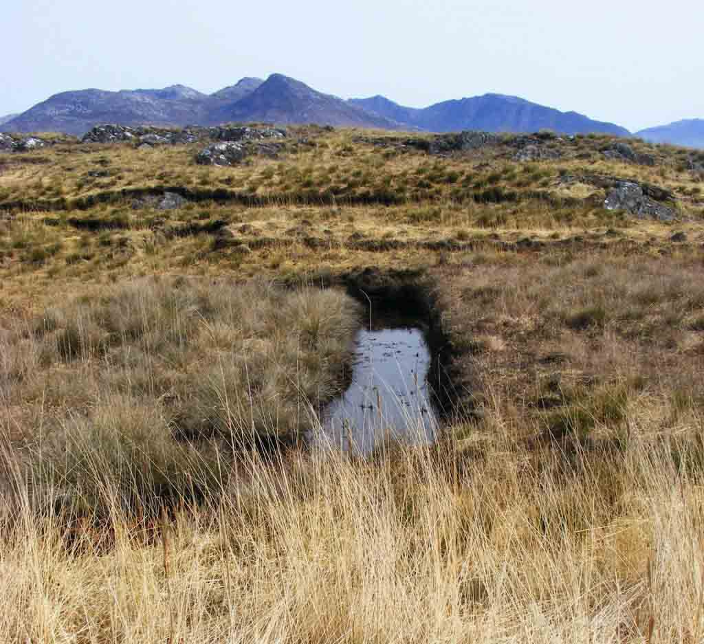 Photo of bog