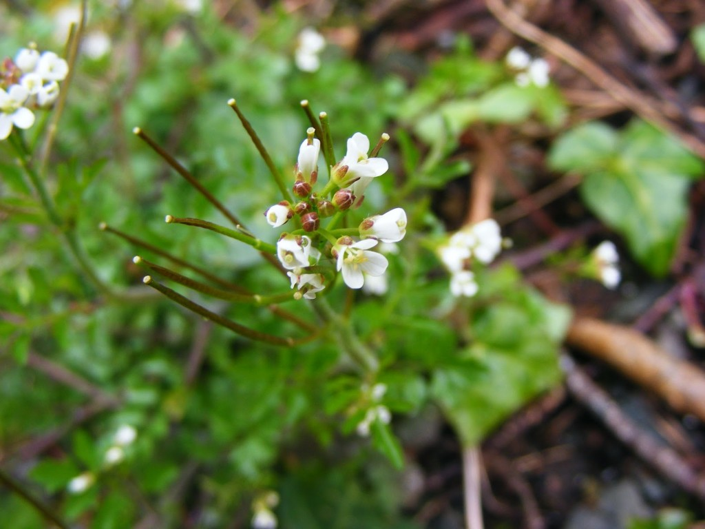 Photo of unidentified white flower