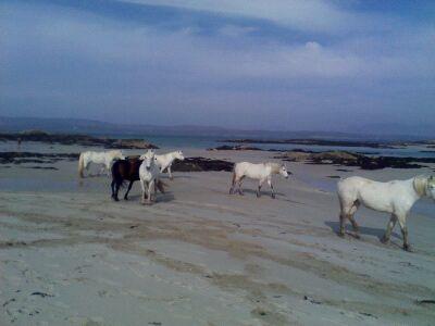 White Horses 3