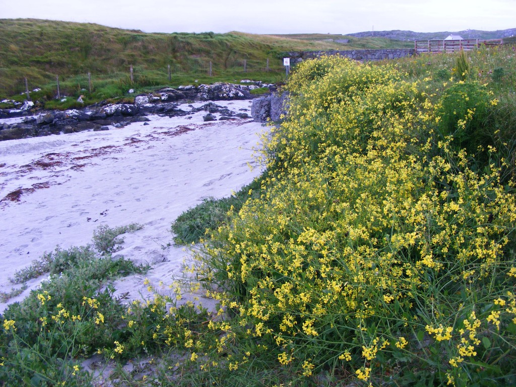 Bank of flowers at Tra Mhor