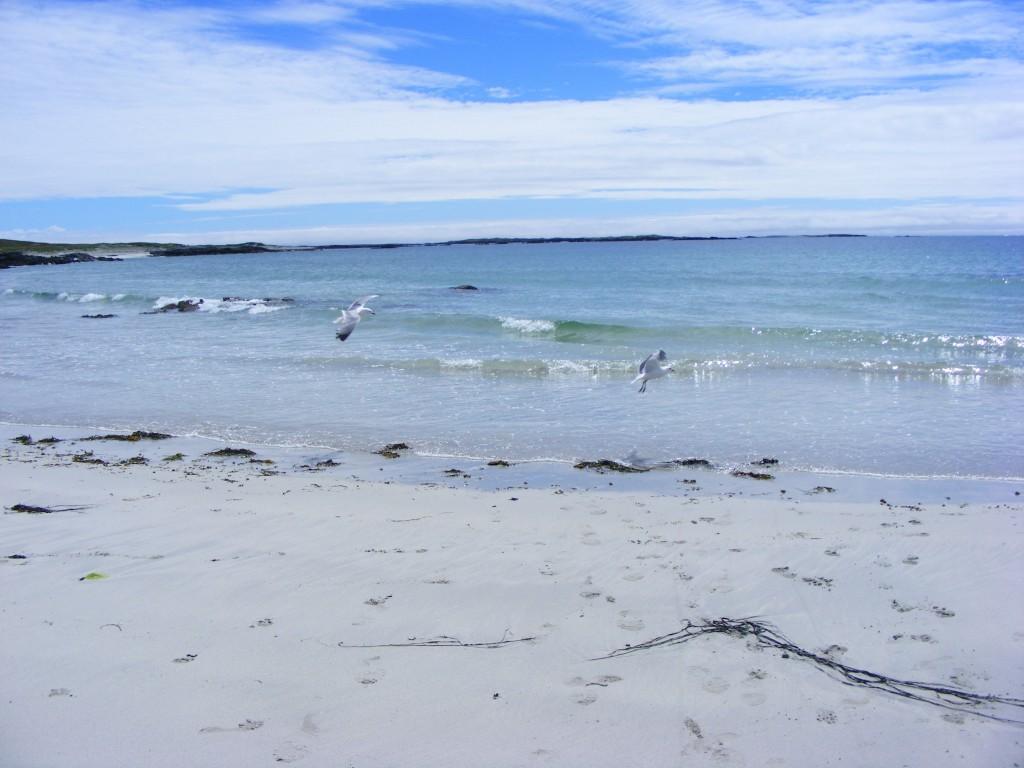 Seagulls at Aillebrack beach
