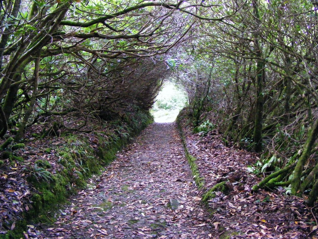 Woodland path at Ballinahinch