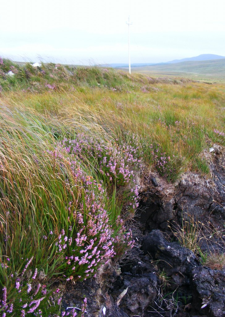 Boglands between Letterfrack and Clifden
