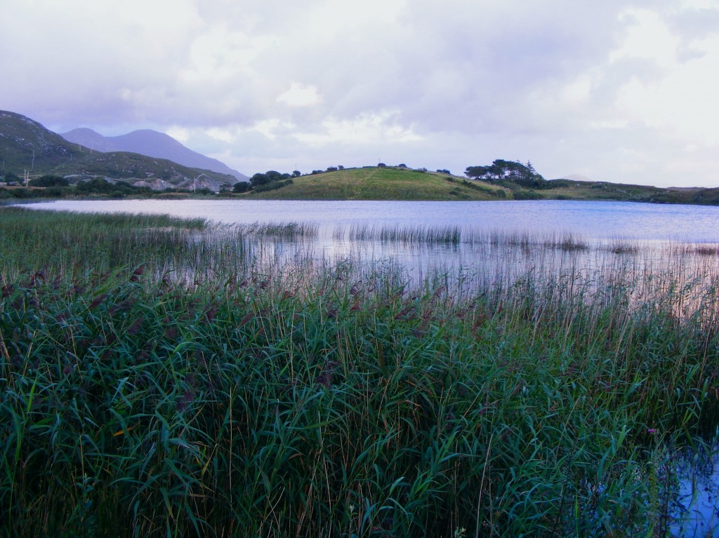 Reeds at Lough Fadda, Clifden