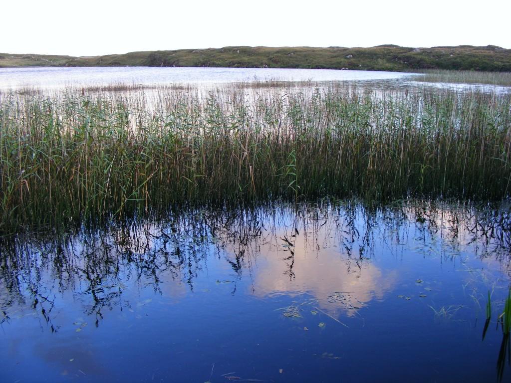 Reflections in Derrylea lake