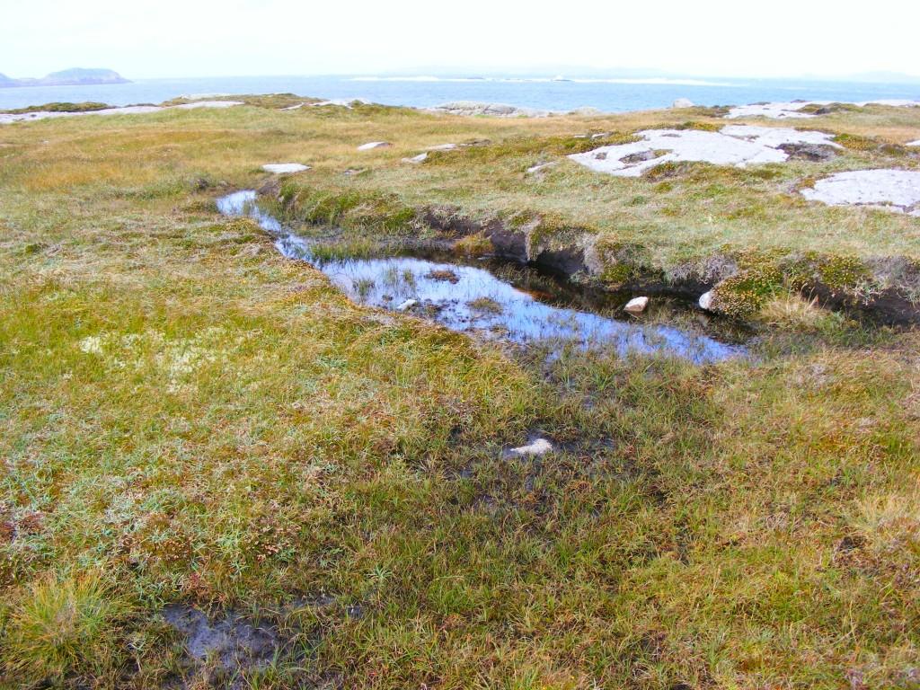 Photo of Bog Pool by Deborah Watkins