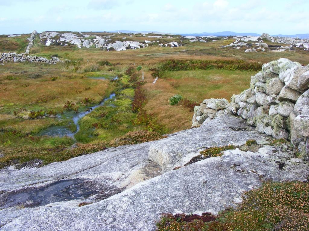 Photo of coastline bog by Deborah Watkins