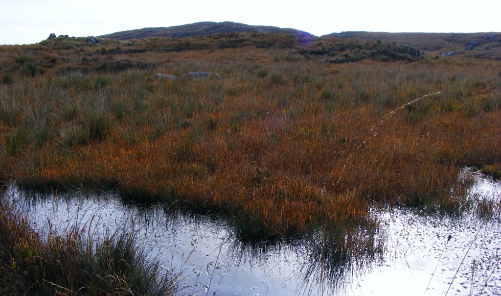 Brown Bog at Roundstone