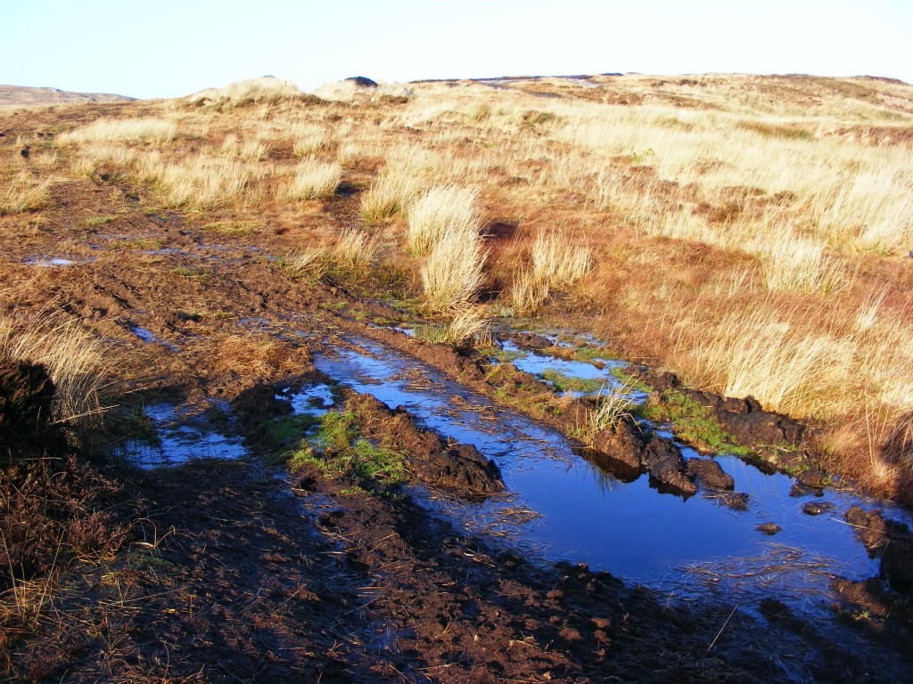Blue reflections on the bog