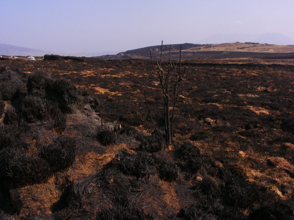 Charred ground after the gorse fires