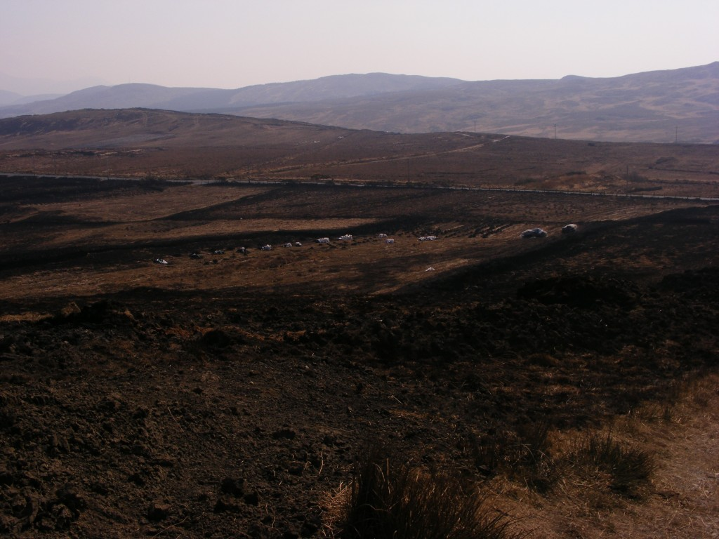 Fields of ash, near Moyard after the fires
