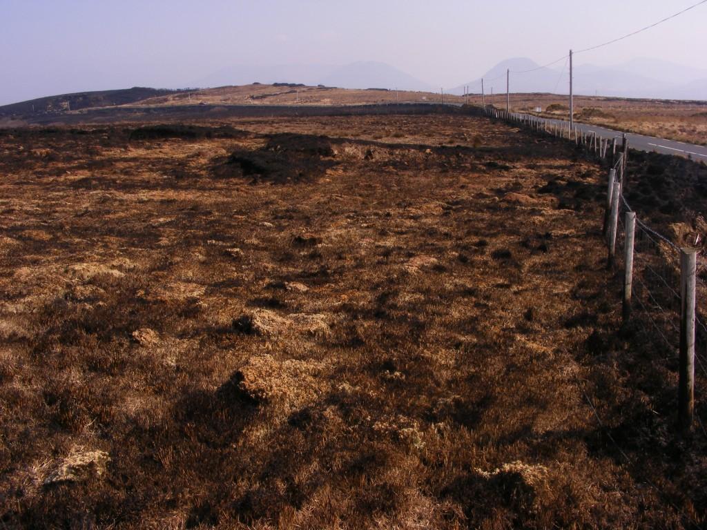 The charred roadsides near Moyard