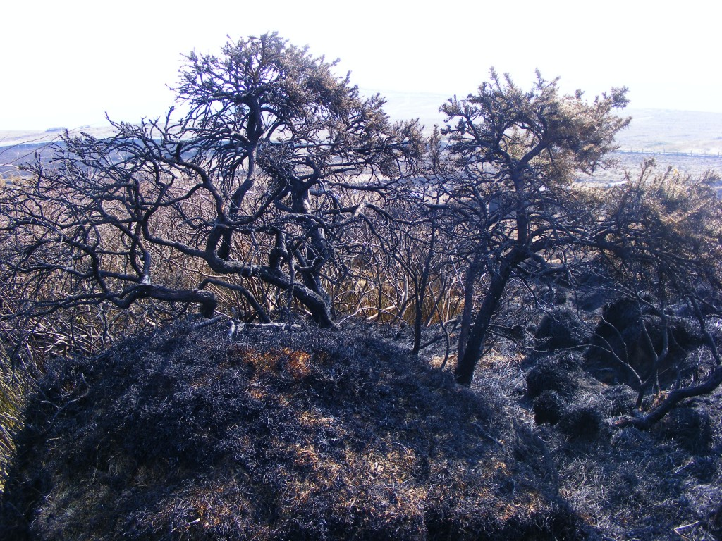 Photo of charred landscape with bluish tinge