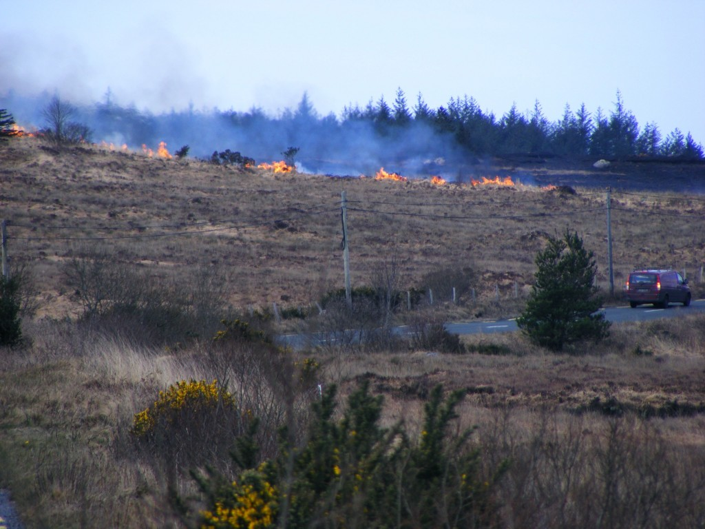 Gorse burning in the distance - Near  Oughterard