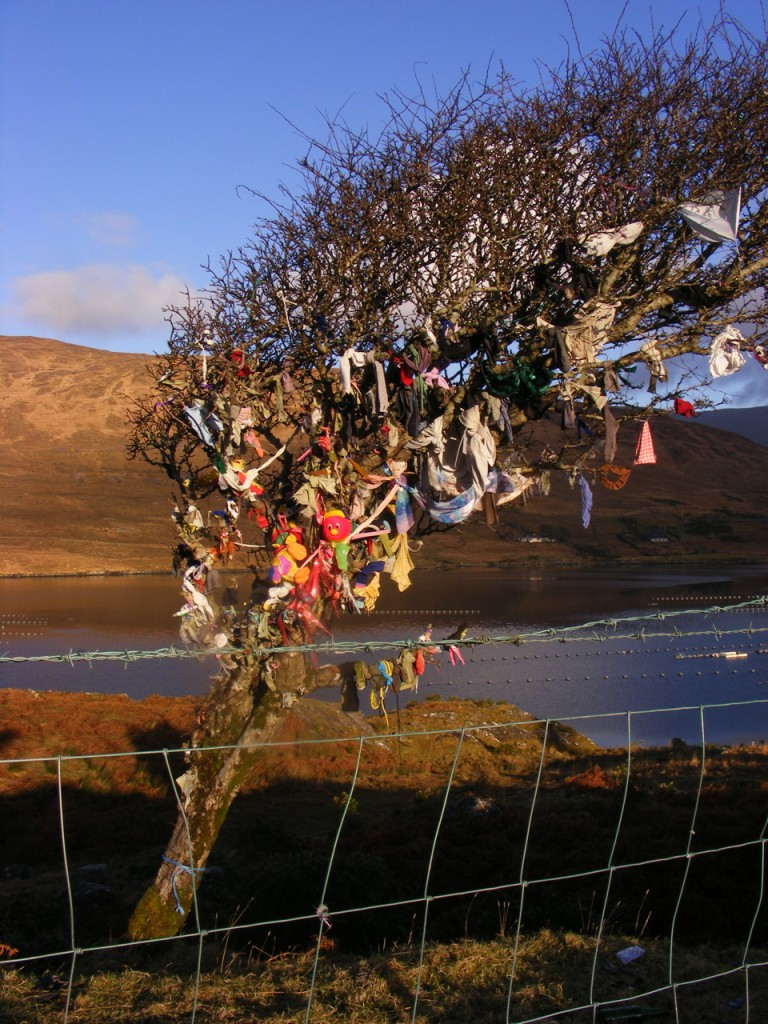 Rag tree near Leenane
